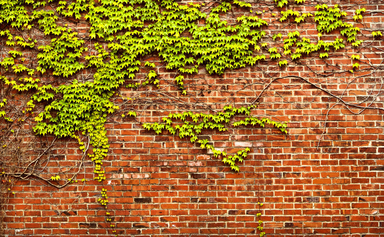 brick wall with ivy panorama by happeningstock on deviantart