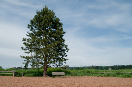 Tree and Bench in Clearing
