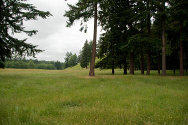 Open Field with Trees and Grass