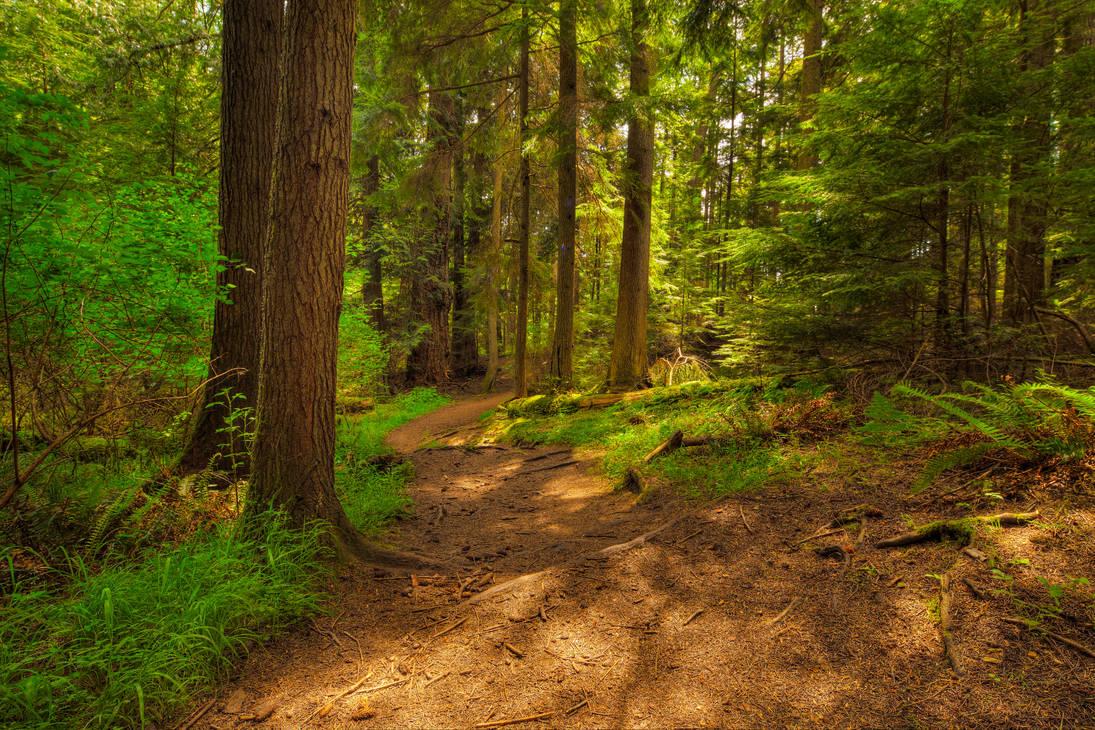 Path Through Trees (HDR)