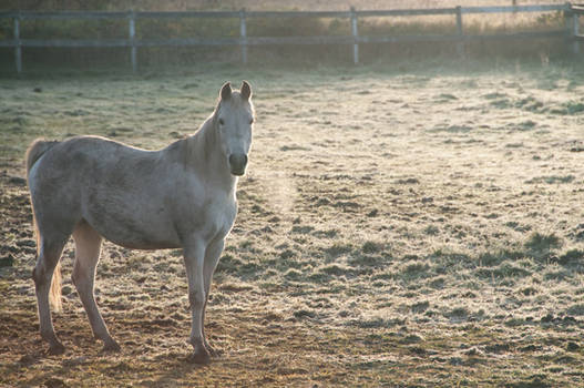 Horse in Cold Field at Sunrise