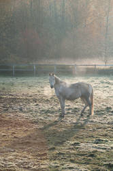 Horse in Cold Field at Sunrise, Vertical