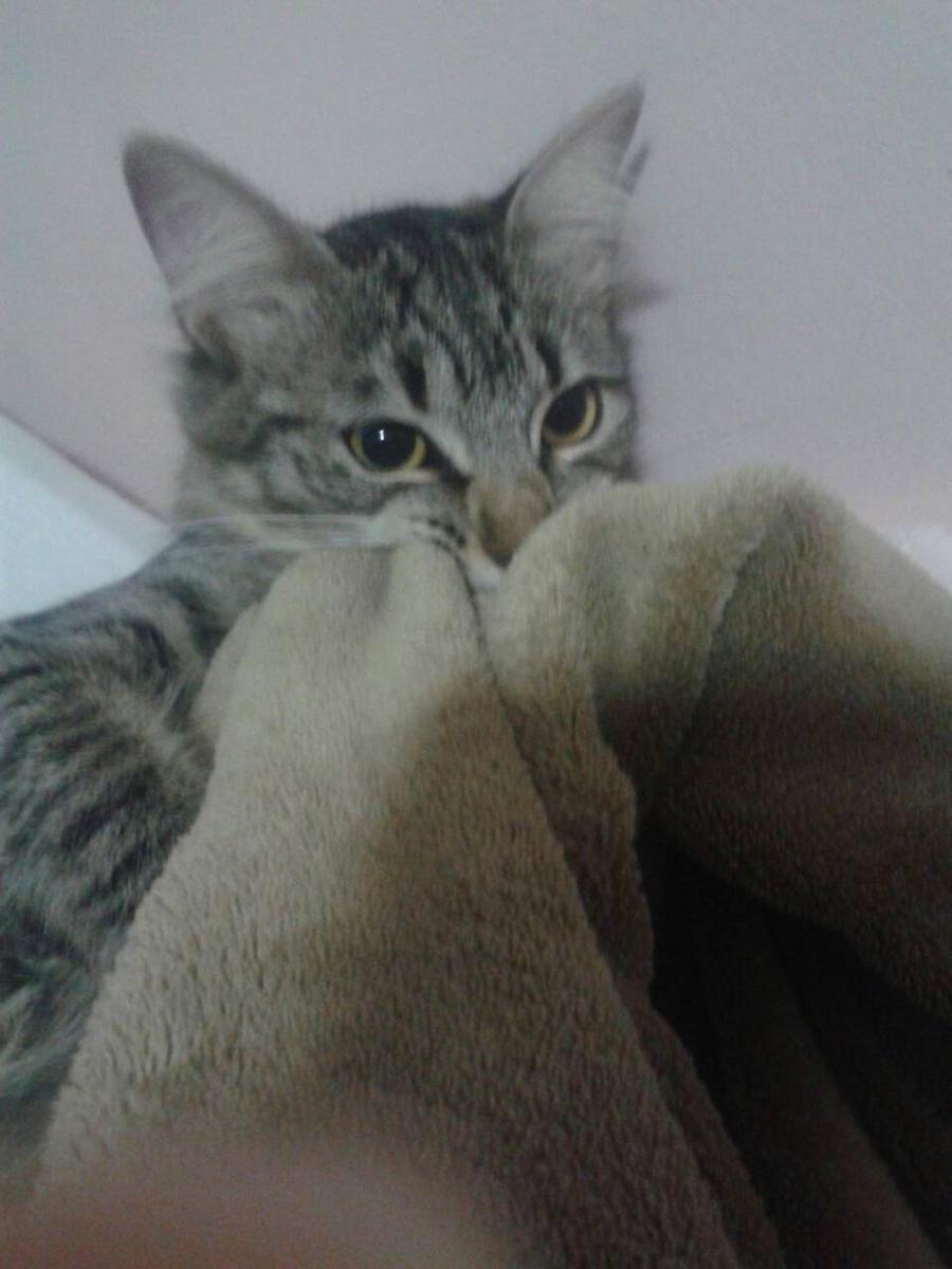 meow by SleepyInu