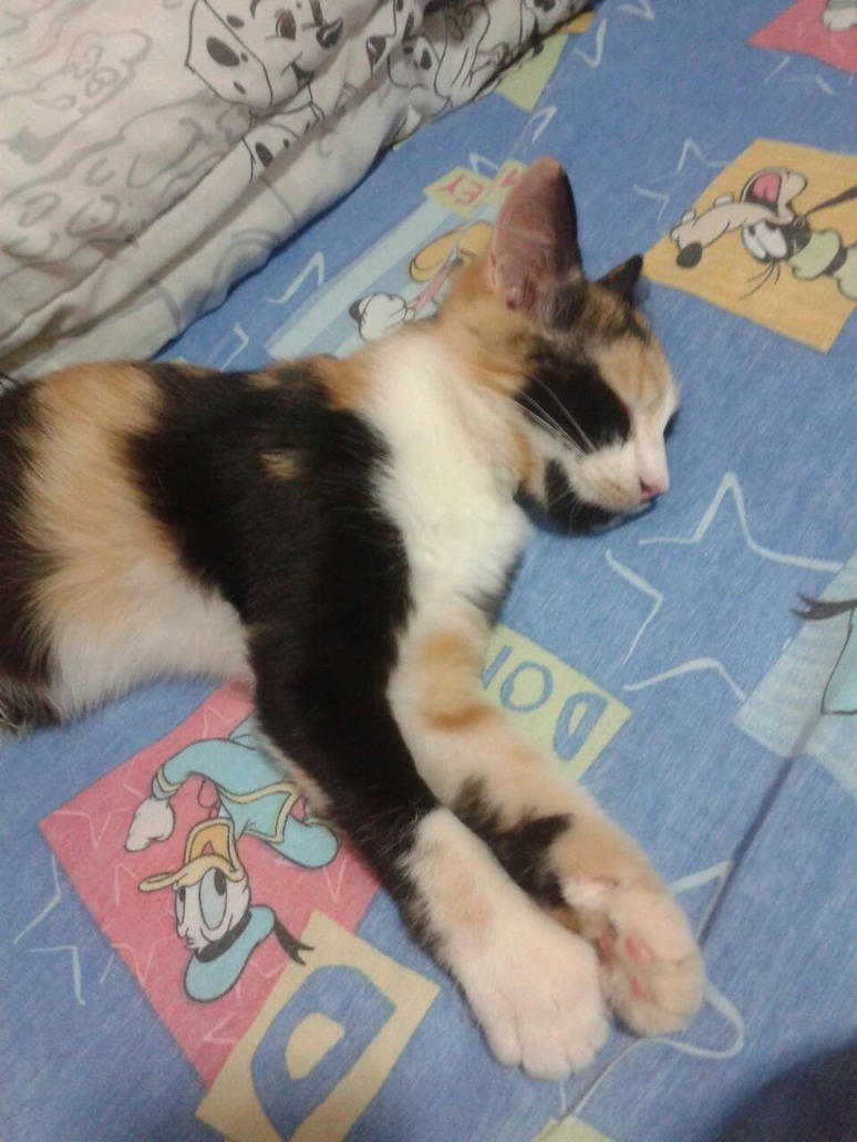 Goodbye, my little kitty by SleepyInu