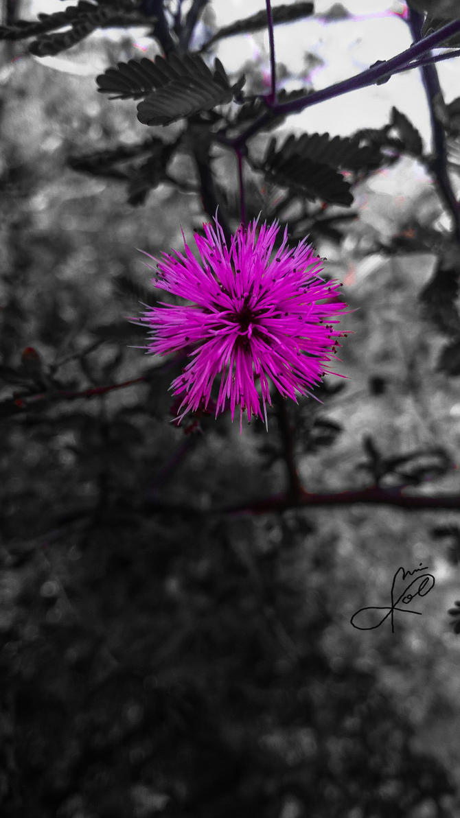 Alguna que otra flor (recolor) by JaiGuruSun