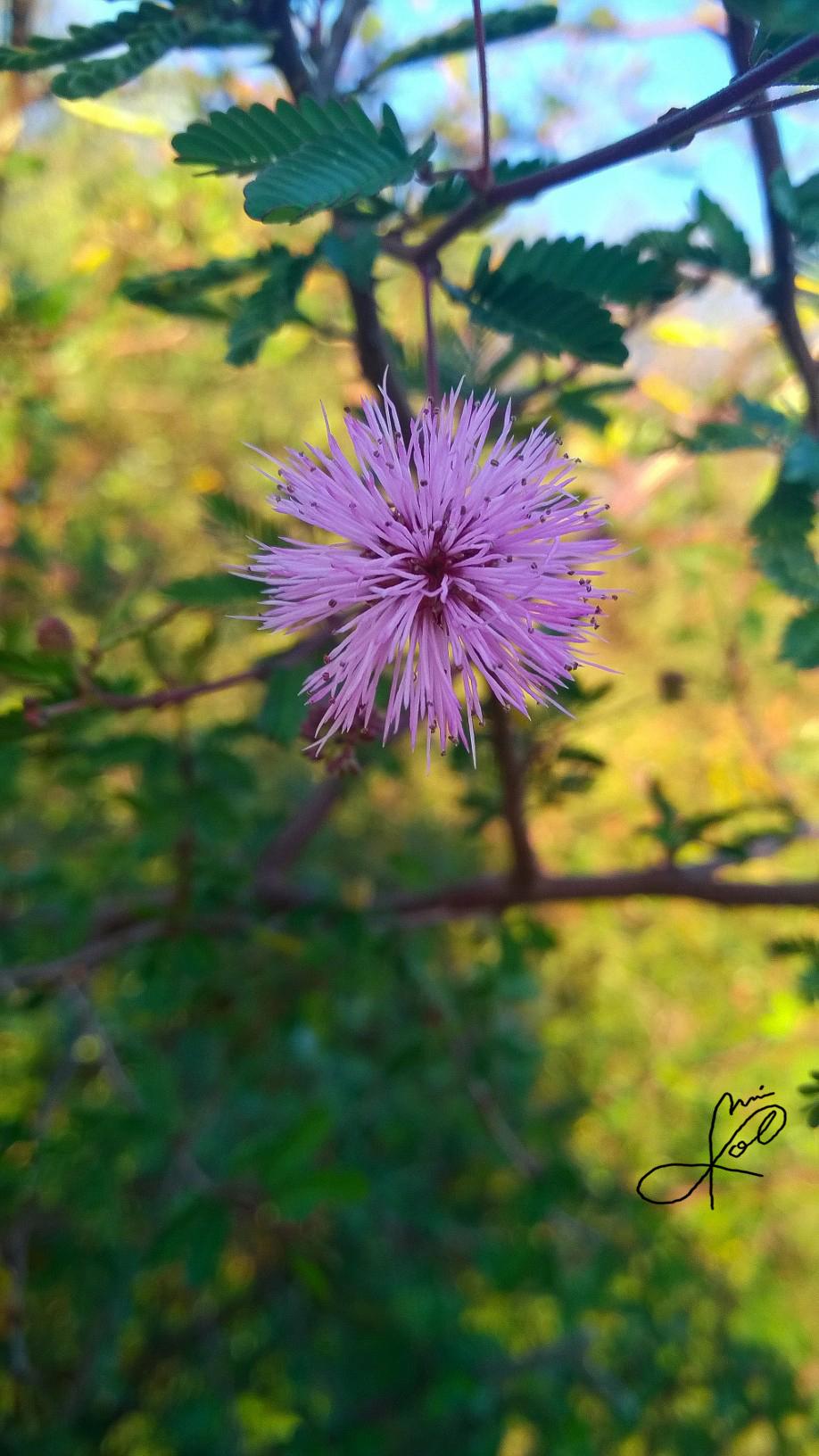 Alguna que otra flor by JaiGuruSun