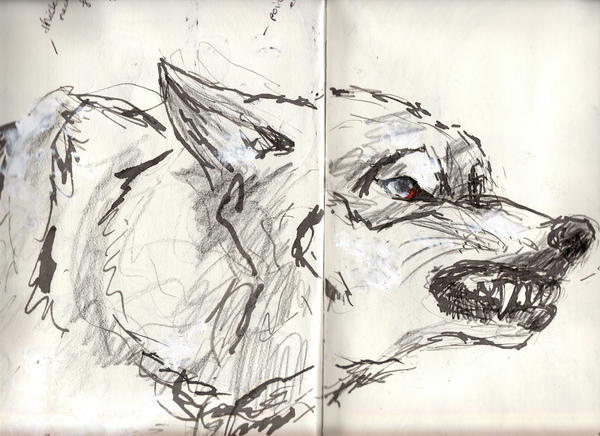 Wolf snarling side view drawing - photo#6