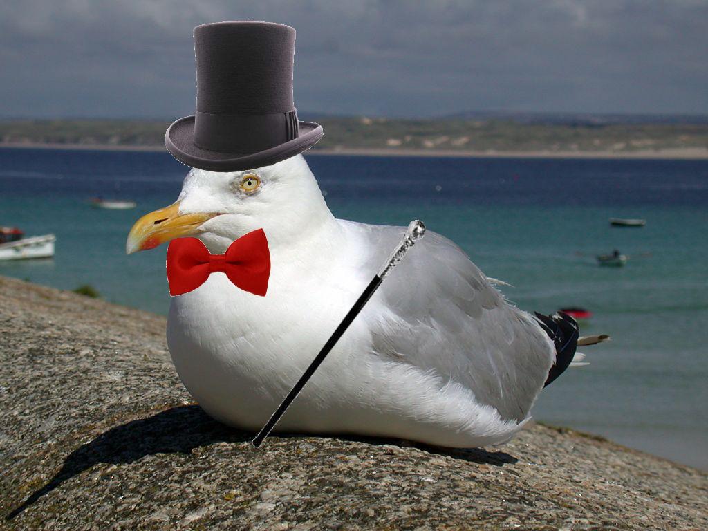 Like-a-sir seagull