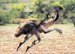 Cybernetic emu