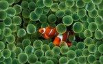Mac Fish Wallpaper by TyRRoche