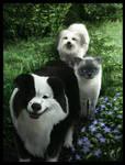 Pet Group Portrait (commission) by SancaA
