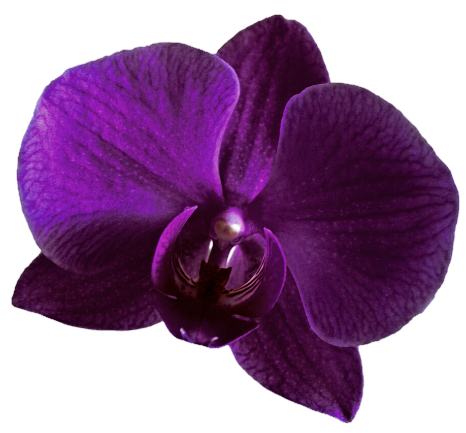 Purple Orchid by jeanicebartzen27 on DeviantArt