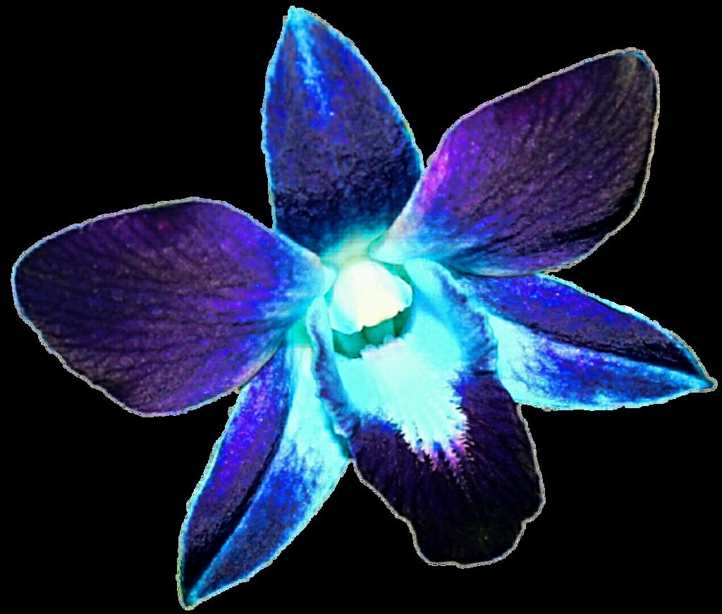 eletragesi: Blue Orchid Clipart Images