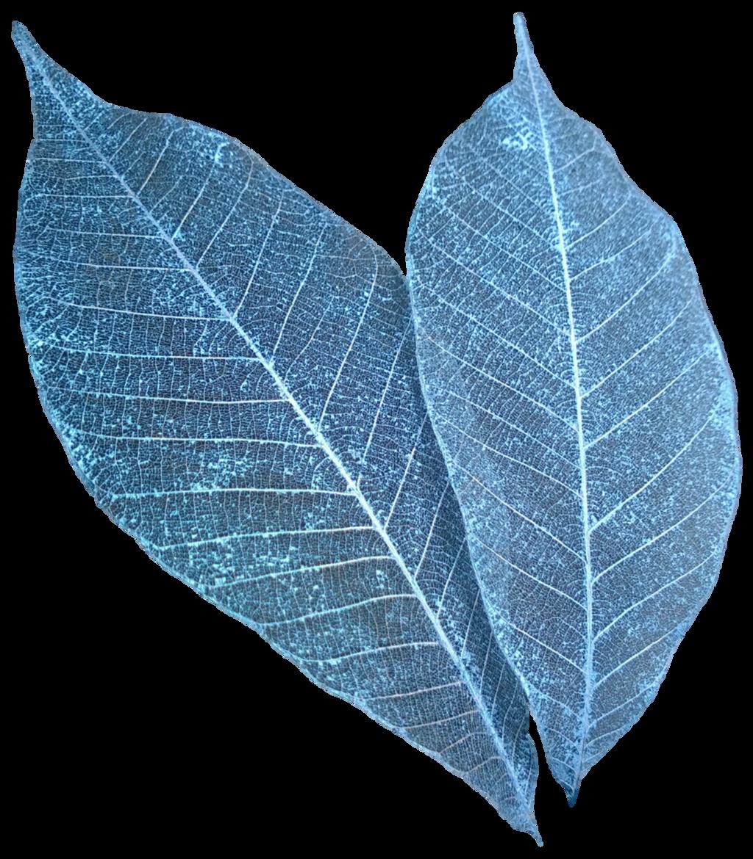 on leaf blue - photo #49
