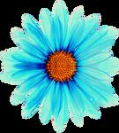 Aqua Daisy