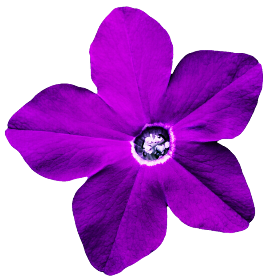 Purple Star Flower By Jeanicebartzen27 On Deviantart