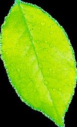 Lime Green Leaf
