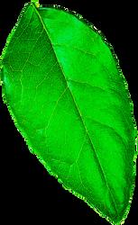 Metallic Green Leaf