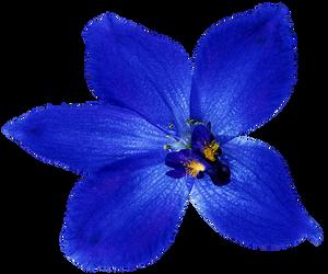 Midnight Blue Orchid by jeanicebartzen27