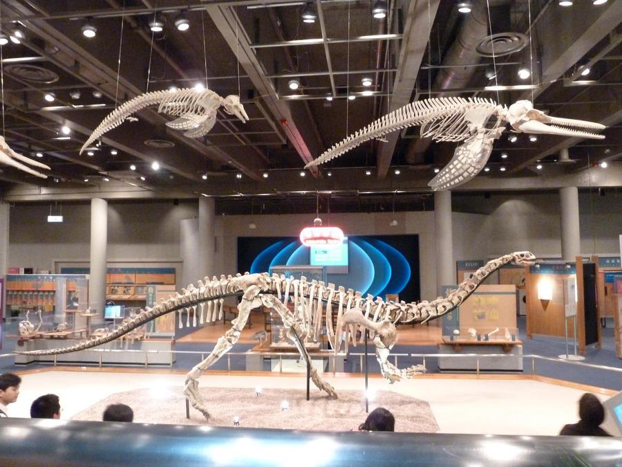 Sinosaurus   Dinopedia   FANDOM powered by Wikia