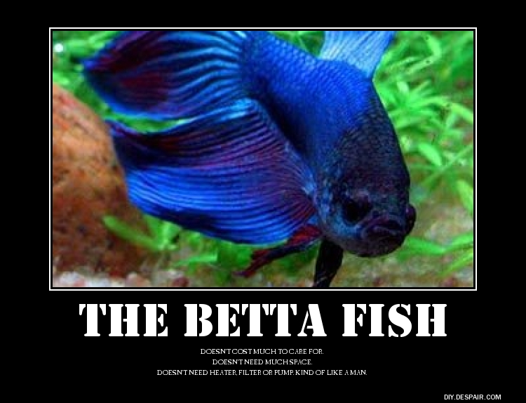Biggest betta fish ever recorded for Biggest betta fish