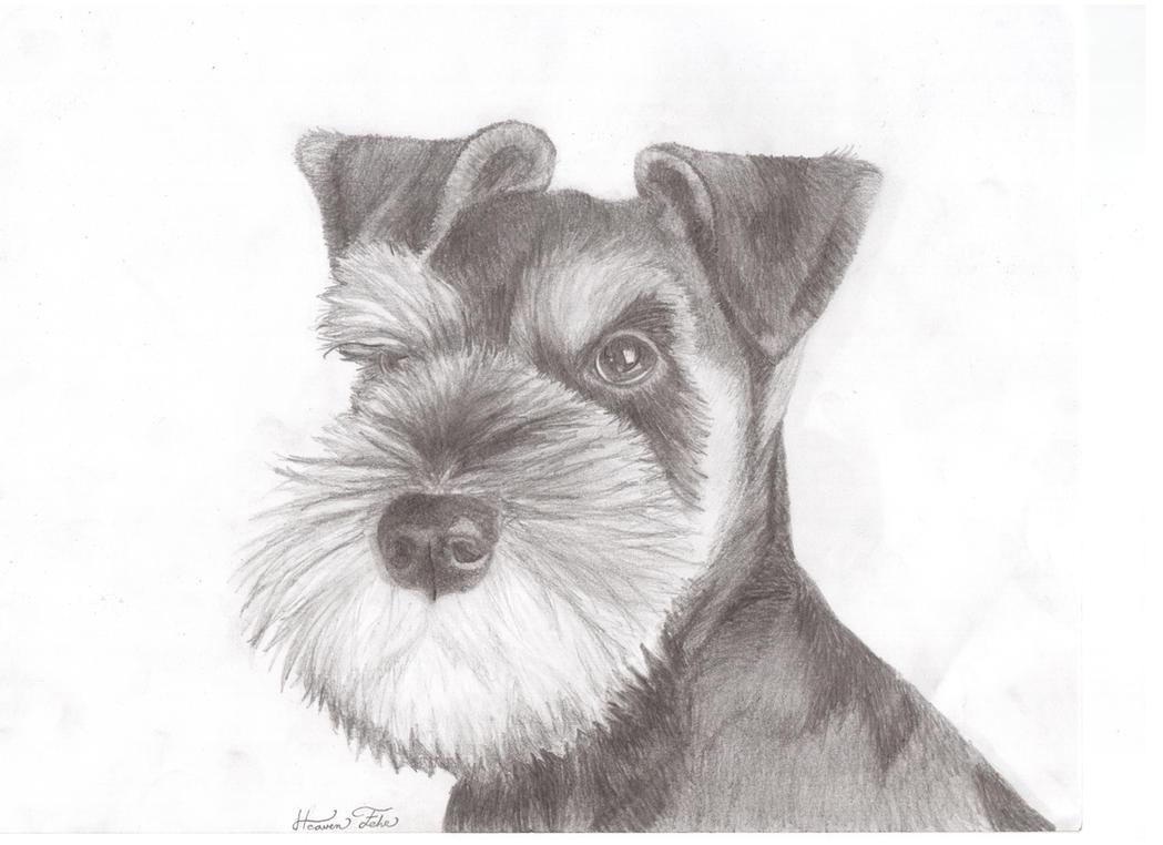 Miniature Schnauzer Puppy Pencil Sketch by Anubis-42