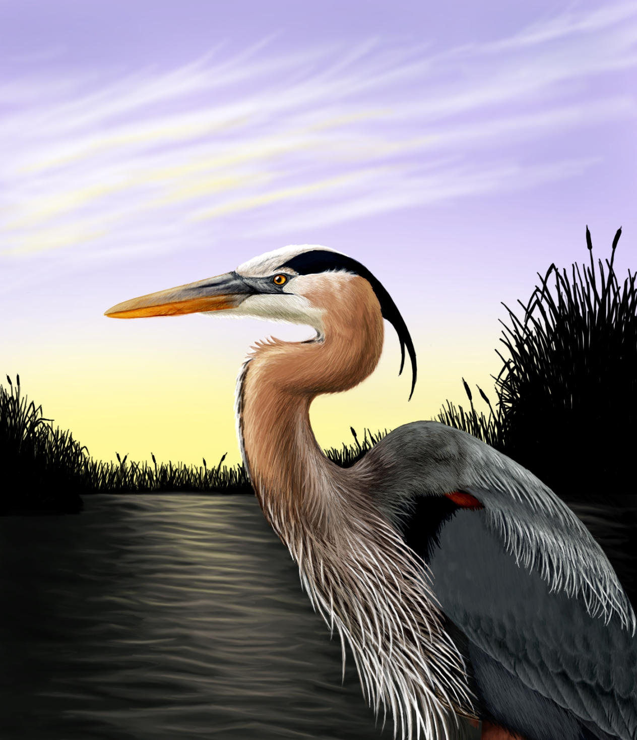 Great Blue Heron - unfinished by Skyelar