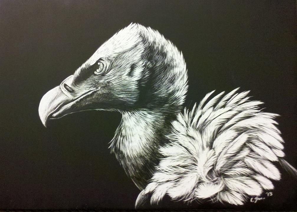 Griffon Vulture - Scratchboard Portrait