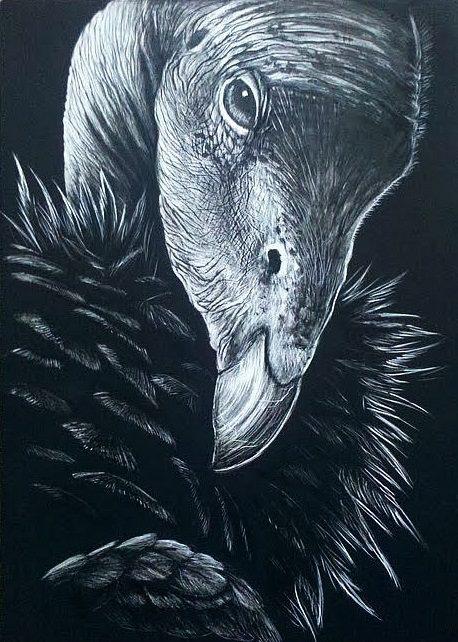 California Condor by Skyelar