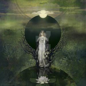 Moonlight Lotus
