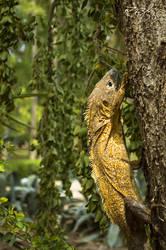 Climbing trees by Rozh-Fox