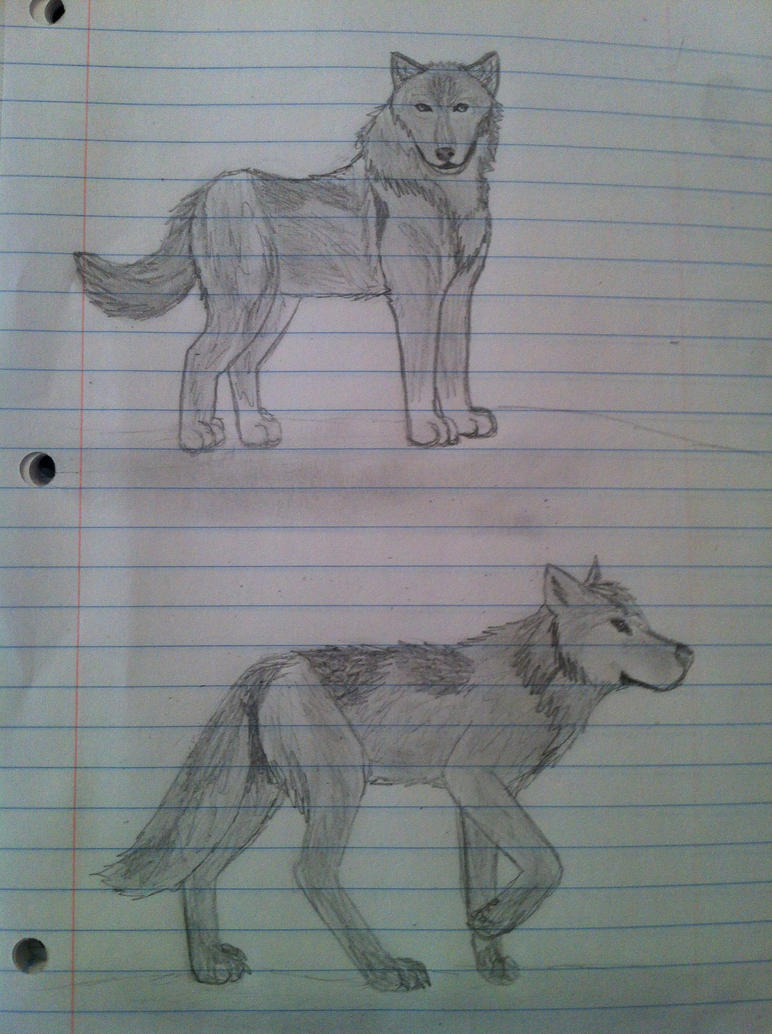 Wolf doodles by Cylexthecat