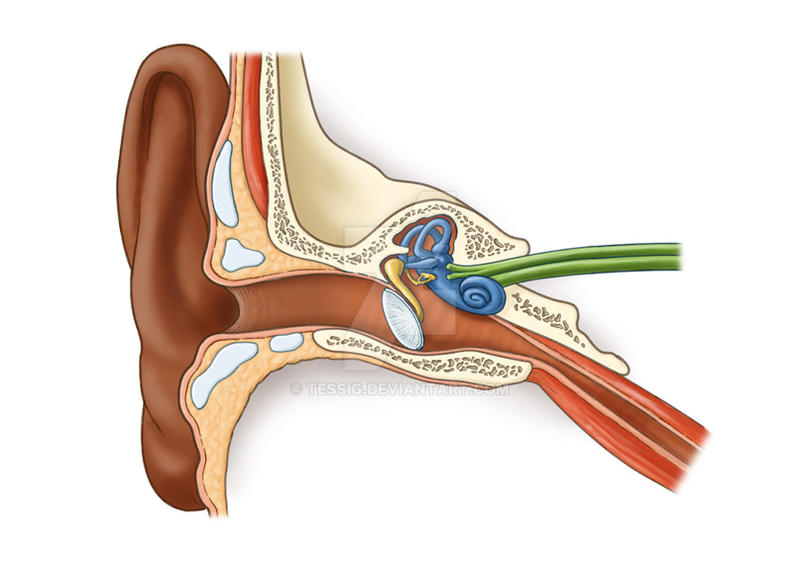 Inside the ear by Tessig