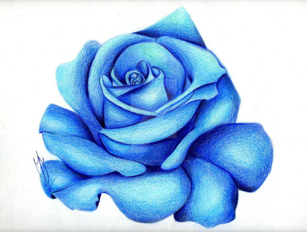 Blue Rose by pensierimorti