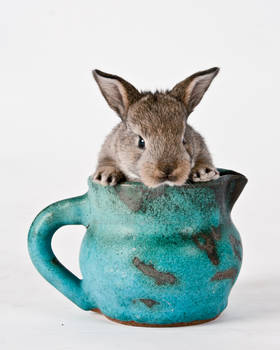 Bunny Premium Stock Test