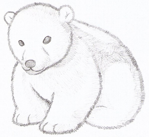 polar bear cub by strovecos on DeviantArt