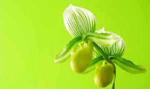 Psychadelic green