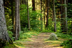 Forest path stock