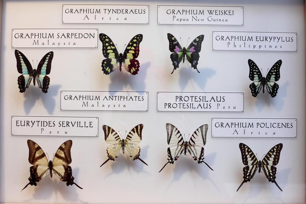Stock butterflies resolution 5616x3744