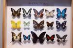 Stock- butterflies 2 - resolution 5616x3744