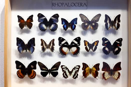 Stock -  butterflies3 -resolution 5616x3744