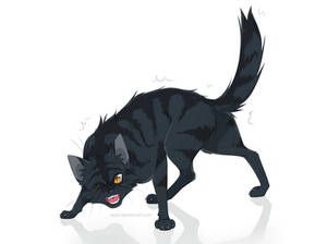Cat - Kurotora