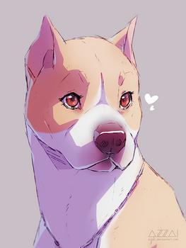 pitbull sketch