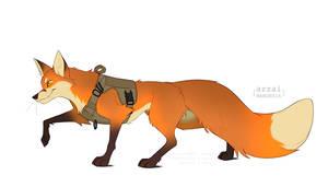 fox in vest