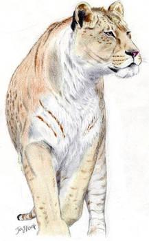 Primitive Cave Lion