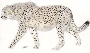 Giant Cheetah by Jagroar