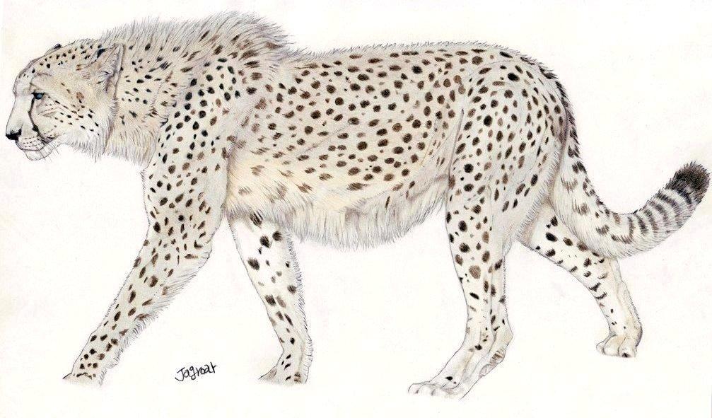 Félins éteints - Page 2 Giant_Cheetah_by_Jagroar