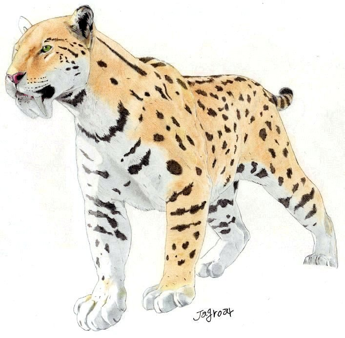 Félins éteints - Page 2 Saber_toothed_cat__Megantereon_by_Jagroar