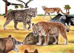 Prehistoric Safari : Pleistocene Florida