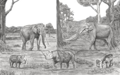 The Largest Elephants Head to Head Part 3 by Jagroar